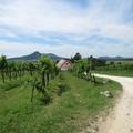 Csobánc hegy lábánál a Villa Tolnay-ban