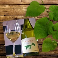 Matetic Vineyards Corralillo Sauvignon Blanc 2010
