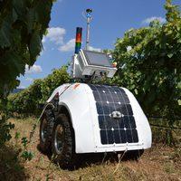 Robotok a szőlőben