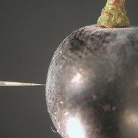 Miniatűr oxigénmérő szonda a szőlőszemekben