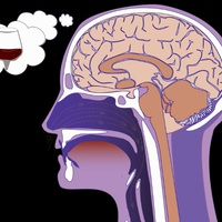A mértékletes borfogyasztás okosabbá tehet