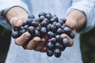 26 új szőlőfajtát azonosítottak Chilében