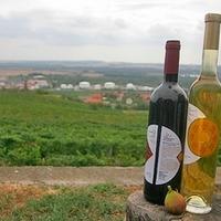Új iskola borászoknak, szőlészeknek Pécsen