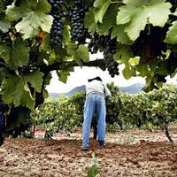 Lendületben az új-zélandi szőlő- és borszektor
