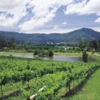 Pannonhalma - jó szőlőtermés várható 2009-ben