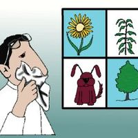 Allergiát okozhat a bor és a sör is