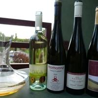 Palack írásai a borokról