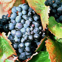 Nekünk bejön az uniós borreform