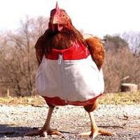 Recept: Boros csirke sajtmártásban