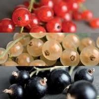 Gyümölcsborok