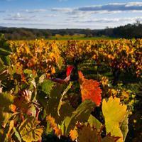 Banktámogatás szőlő és bortermelőknek!