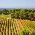 A provence-i napfény nyomában - Figuiére rosé duó