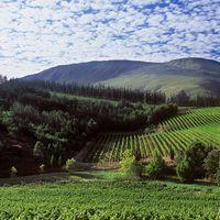 Dél-Afrika megmérettetik I.- A vörösek