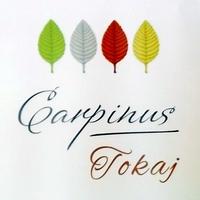 Carpinus borok 2015-ből