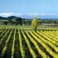Sauvignon blanc 2014 II. - Új-Zéland
