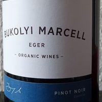 Új kezdet - Bukolyi Marcell Pinot Noir 2018