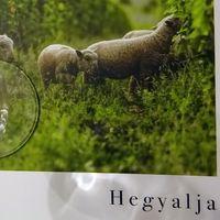 Tokaji évjáratkörkép a Bortársaságnál - 2018