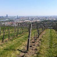 Rejtőzködő borvidékek: Wien (Bécs) - Weingut Wieninger és Weingut Mayer