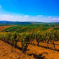 Két nap Tokaj, második rész – Gizella Pince