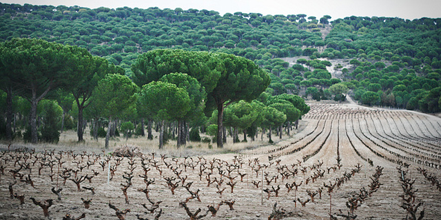 vega_sicilia.jpg