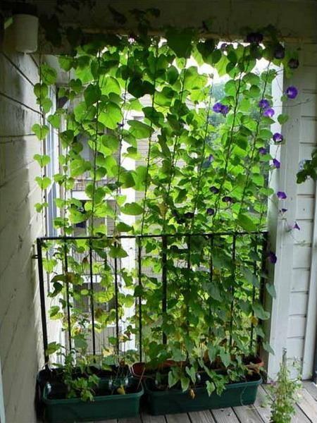 balkon_kert4.jpg