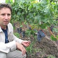 St. Andrea Pinot Noir 2006