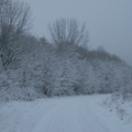 2010. december 30. Nagybörzsöny - Bányapuszta - Kuruc-patak-völgye - Vadálló - Halyagos - Kemence
