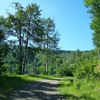 2011. május 29. Nagyoroszi - Pénzásás - Oszlopó-völgy - Varjas-menedék - Bacsina-völgy - Magosfa - Csóványos - Kárpátok kulcsosház - Királyrét