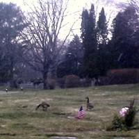 Rabosítás, tévelygés a temetőben és fagyasztott golyók