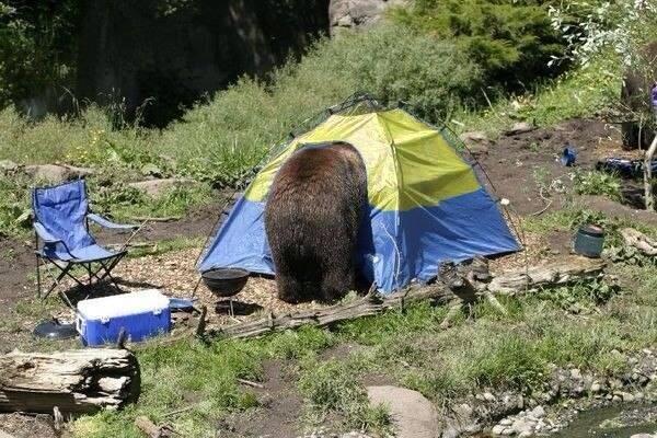 orosz medve - ukrán sátor.jpg