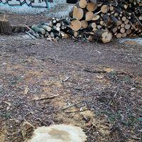 Brüsszel: Túl sok fát vágnak ki Magyarországon az építkezések miatt