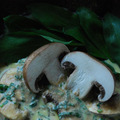 Medvehagymás tócsni gombából