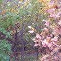 A Rákospalotai erdő