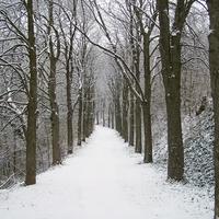 Ilyen volt a Tenkes hóban  (2010. január 19.)