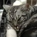Nemzetközi Macskakiállítás November 15-16.