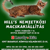 Hill's nemzetközi macskakiállítás
