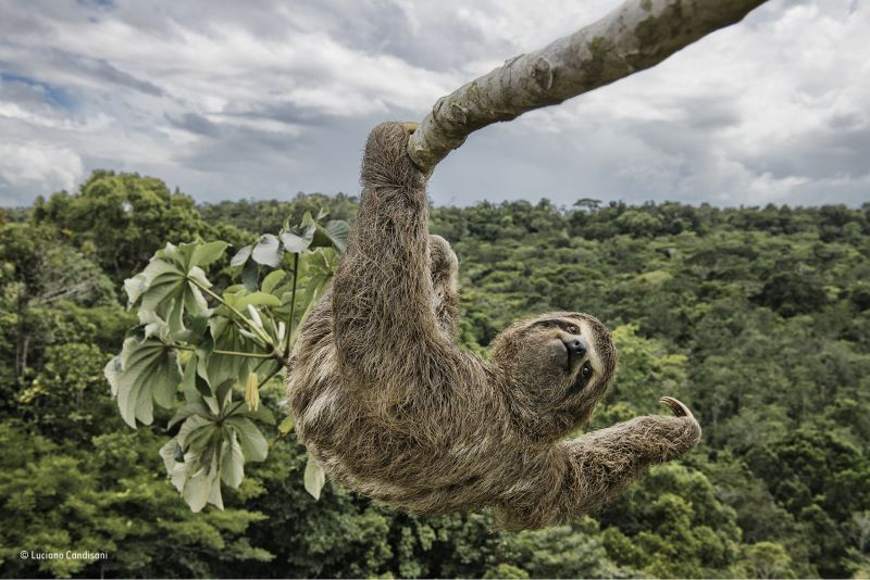 lucianocandisani_sloth_hanging_out.jpg