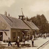 Az úttörővasút Csillebérc állomása 1952-ben