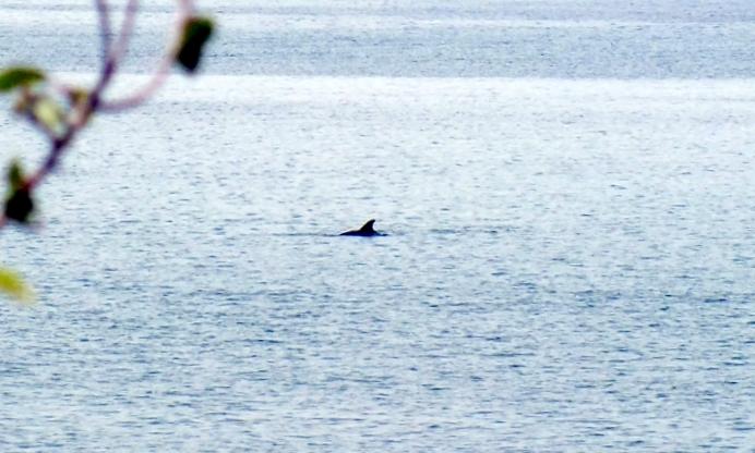 dscf8539_delfin.JPG