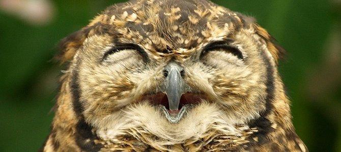 owl-smile_1.jpg