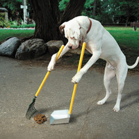 Mit érdemel az, aki az utcára szaratja a kutyáját?
