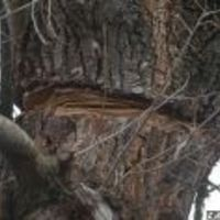 Mit érdemel a panorámáért fákat irtó férfi?