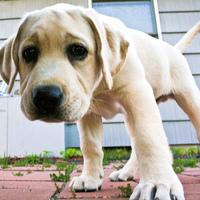 Mit érdemel a kutyát az autópályán kidobó gazdi?