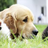 A burzsujok a kutyákat szeretik