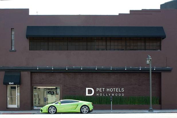 Burzsuj kutya: komoly az igény a luxushotelekre