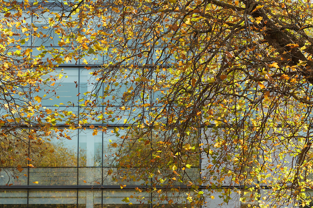 autumn-leaves-infront-of-office-building.jpg