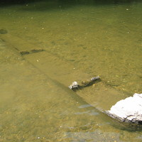 Meglepő felfedezés az Ipoly medrében