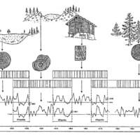 Dendrokronológiáról dióhéjban