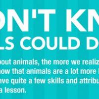Mire képesek egyes állatok?