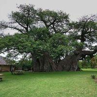 Ház a fában